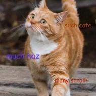 Profile picture of kittaykat
